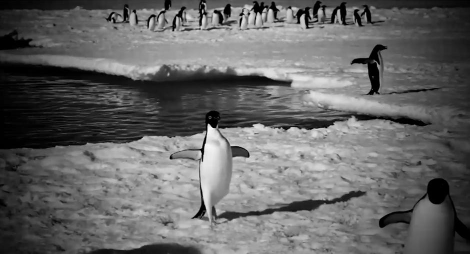 Пингвины легкого поведения