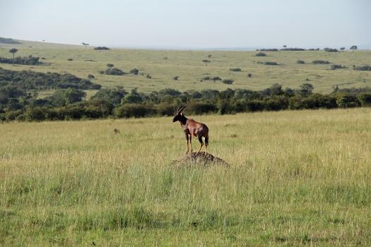 Вокруг Кении за 20 дней - Топи или козел Ханютина, а не Томпсона