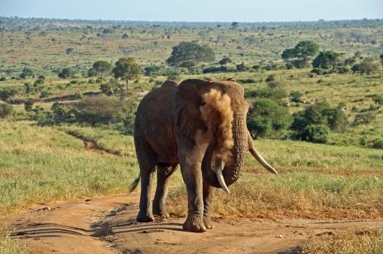 """Вокруг Кении за 20 дней - съемки 2го сезона """"Все как у зверей"""": Африканские слоны - не индийские. Им на шею не сядешь"""