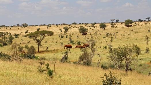 Вокруг Кении за 20 дней - Красные слоны в Цаво-вест