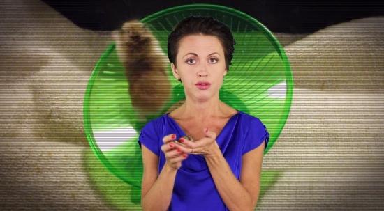 Первый эксперимент животных над человеком, пытающимся объяснить прокрастинацию на хомячках